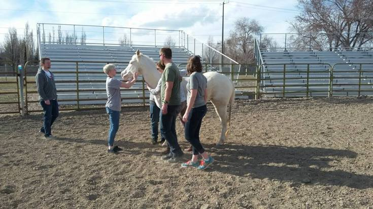 Equine Assisted Psychotherapy 7